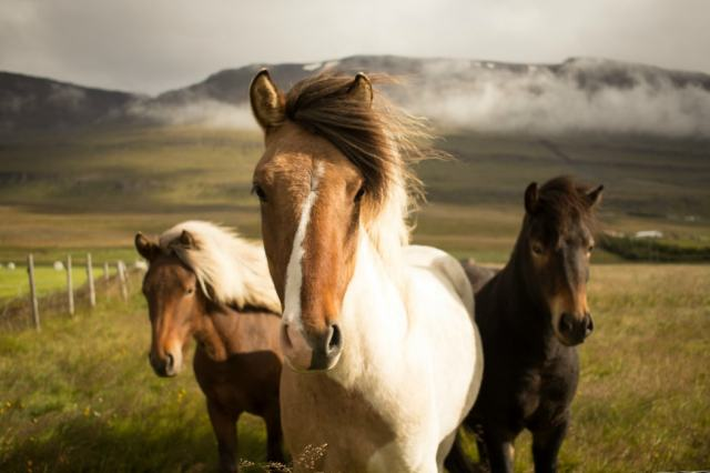 wild_horses_slow_parenting-min.jpg